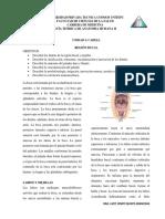 REGIÓN BUCAL.pdf