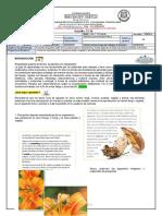 Guia de aprendizaje reproducción vegetal y fungí - C. Naturales - Cuarto - Sem 13-14