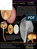 Gymnopilus cf luteofolius Mushroom Colombia, 2018