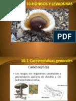 10-Hongos y Levaduras