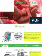 Embrioo