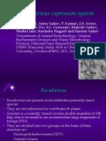 Baculovirus Expression System