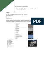 bacterias y la producción de biosurfactantes-biorremediacion.docx