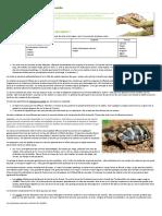 Les Principaux Parasites Externes Des Reptiles