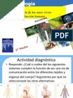 Sistema_endocrino.pdf