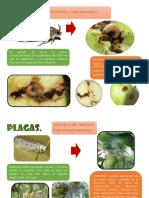 PARTE FALTANTE DEL PDF