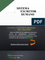 sistemaexcretorhumano