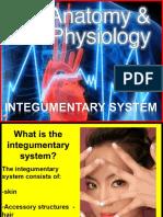 Integumentary-System