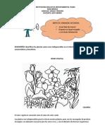 ciencias tercero reino vegetal