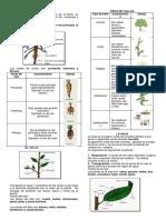 BIOLOGIA   HOJA 2. PARTES DE LA PLANTA Y CLASES