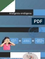 Analgesia endógena.pptx