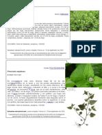 herbario,plantas - copia.docx