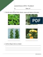 evs plant sworksheet.pdf