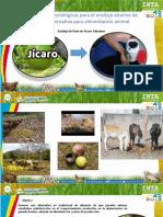 ensilaje alcalino de jicaro (Crescentia cujete) para alimentación de bovinos