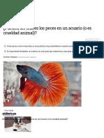 ¿Pueden ser felices los peces en un acuario (o es crueldad animal)_