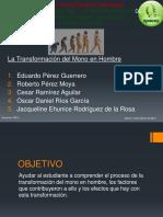 latransformaciondelmonoenhombre-130526195620-phpapp01