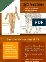 8.+Neural+Tissue.pptx