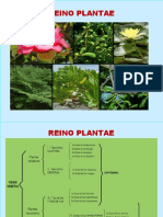 Clase V Clasificacion Plantas