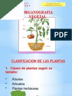 Clase V Organografia Vegetal