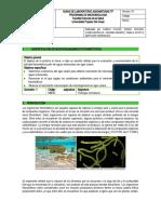 Guia de Identificacion de microorganismos fotosinteticos