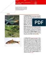 Puntius Denisonii Red Data Book IUCN 2009.2