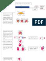 flujograma sistema cardiaco.pdf