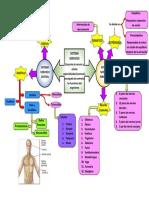 Mapa mental, sistema nervioso- Constanza Tapia
