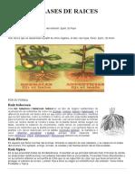 CLASES DE RAICES.docx