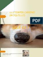 DISTEMPER CANINO (MOQUILLO)