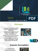 pseudomona (3)