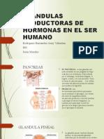 GLANDULAS PRODUCTORAS DE HORMONAS EN EL SER HUMANO