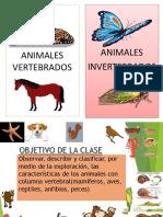 Animales Vertebrados 2 Basico