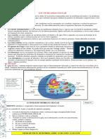 citoplasma celular eee.pdf