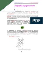 8-chromatographie-de-pigments-verts-3