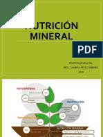 6. Nutrición mineral