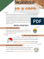 ANATOMOFISIOLOGÍA DE LA CABEZA.pdf