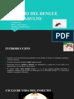 CLASE DE DENGUE ADULTO (1)