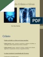 aula anatomia de cranio e toráx.ppt
