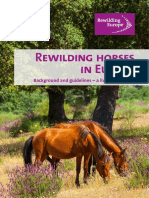Rewilding-horses-in-Europe-2014