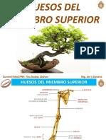 7° HUESOS M. SUPERIOR