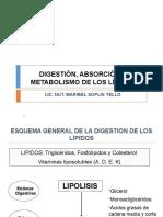 12- DIGESTIÓN, ABSORCIÓN Y METABOLISMO DE LOS LÍPIDOS