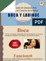 BOCA Y LARINGE