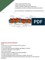 Membrana Celular-Resumen