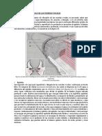3. Histología del Pliegue Vocal.pdf