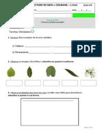 EEC EM CID  AULA 4 PLANTAS HANSEL GRETEL 2ANO