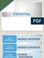 huesos del craneo completo.pdf