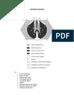 examen maquinarias (2).docx