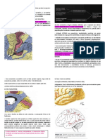 Anatomia funcional do córtex.pdf