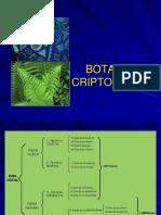 CRIPTOGAMAS  1  de Dr Dante Choquehuanca Panclas