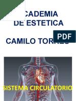 2. sistema circulatorio toma de pulso